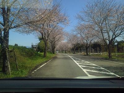 垂水公園桜並木120331