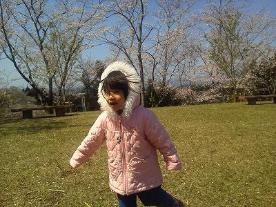 垂水公園桜