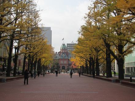 札幌銀杏並木