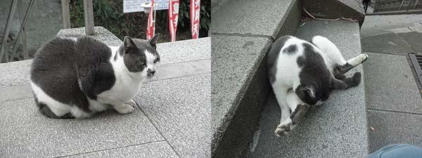 20111124猫②