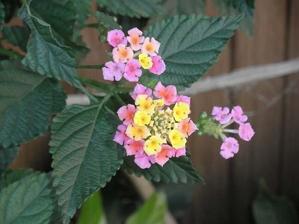 20111124花①