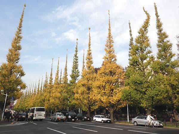 20111129銀杏並木①