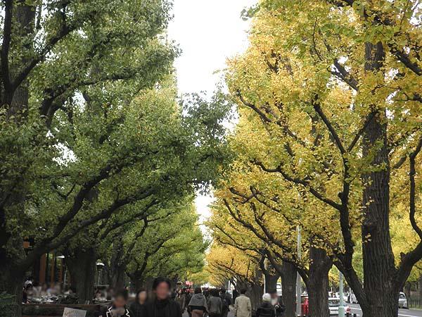 20111129銀杏並木②