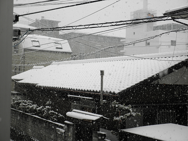 20120229雪①