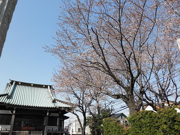 20120405お墓参り①