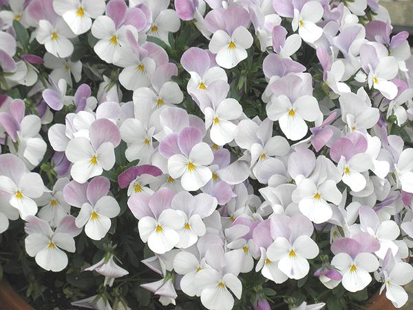 20120421花
