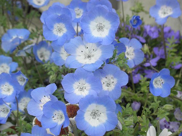 20120421花②