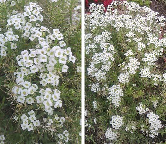 20120623花