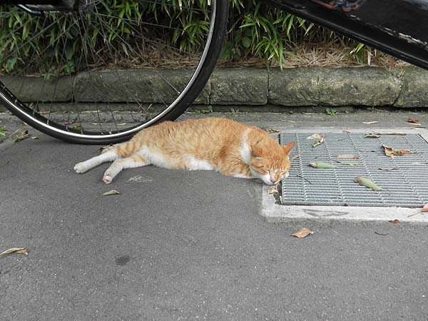 20120714鎌倉のネコ