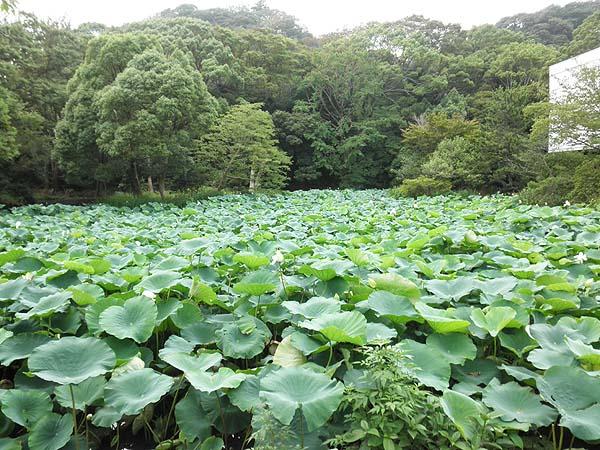 20120714八幡宮①
