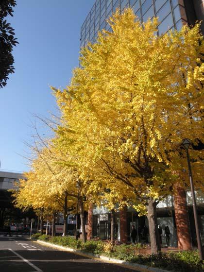 20121205紅葉②
