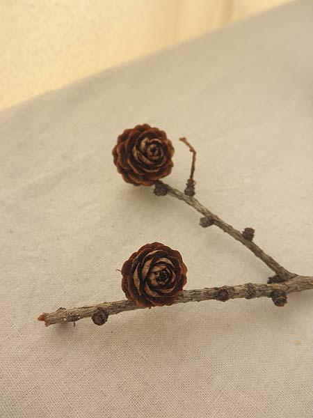 20121219木の実