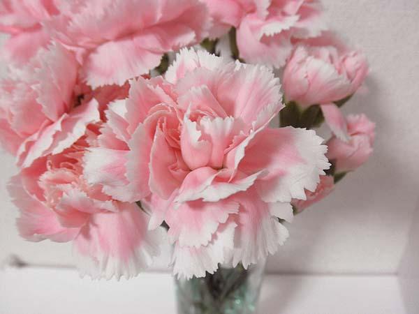 20121230花