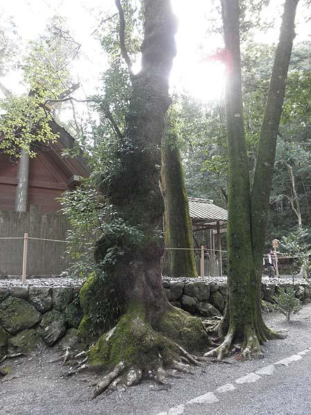 20130125木
