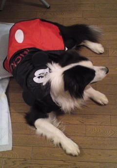 ミッキーさんのかっぱ