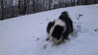 雪遊び2ダーイブB
