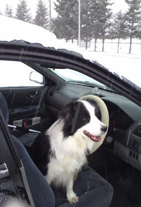 運転はエルフィに任せましたb