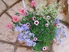 選んだお花