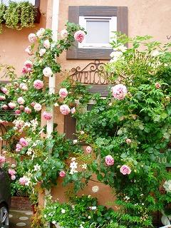 窓辺に咲くバラたち