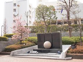 調布の河津桜2