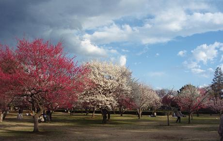野川公園1