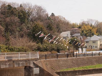 野川沿い5