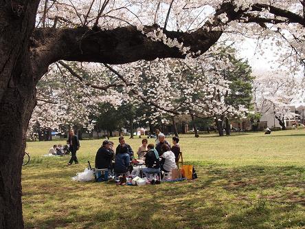 野川公園桜6