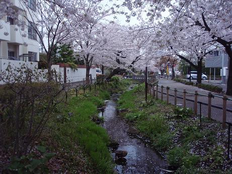 北沢川緑道4