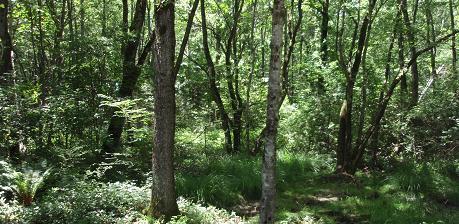 妖精の森2