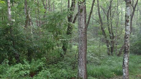 妖精の森1
