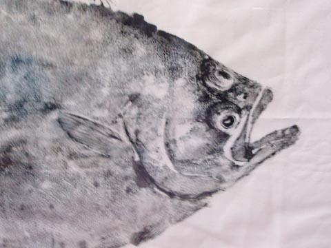 ヒラメ顔1
