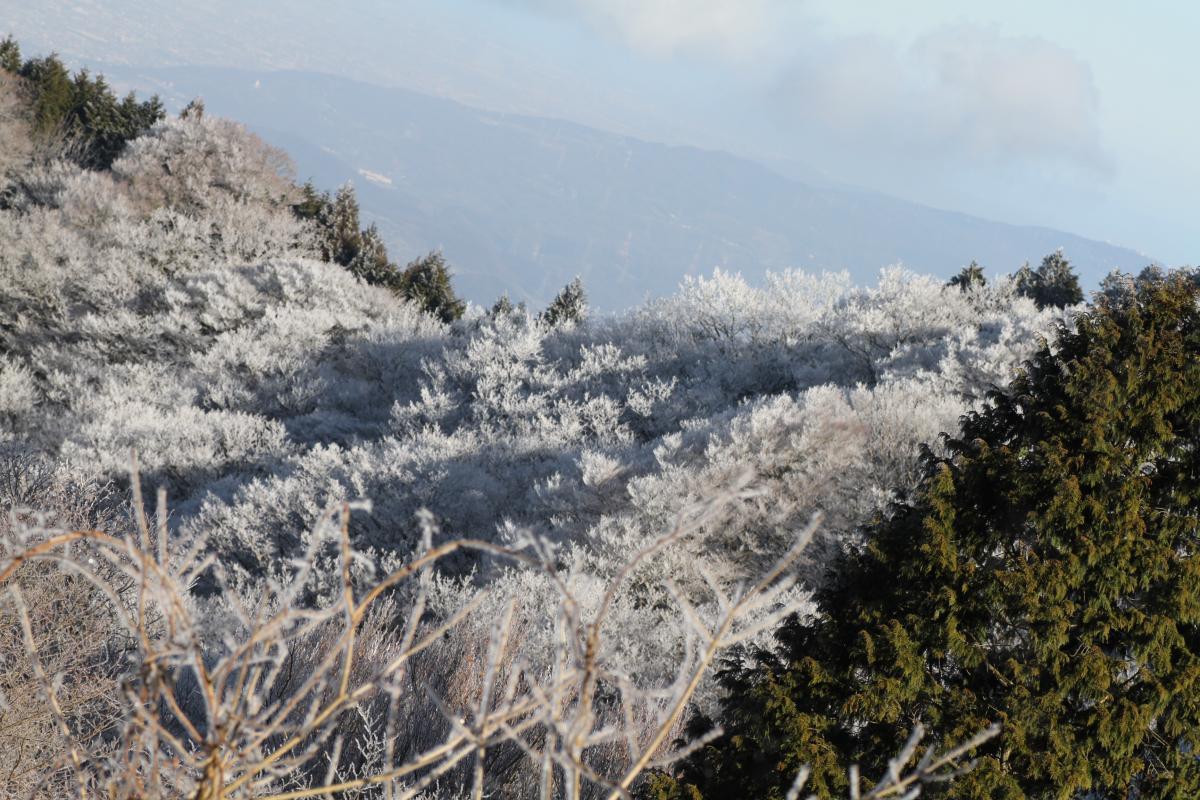 樹氷(遠くから)