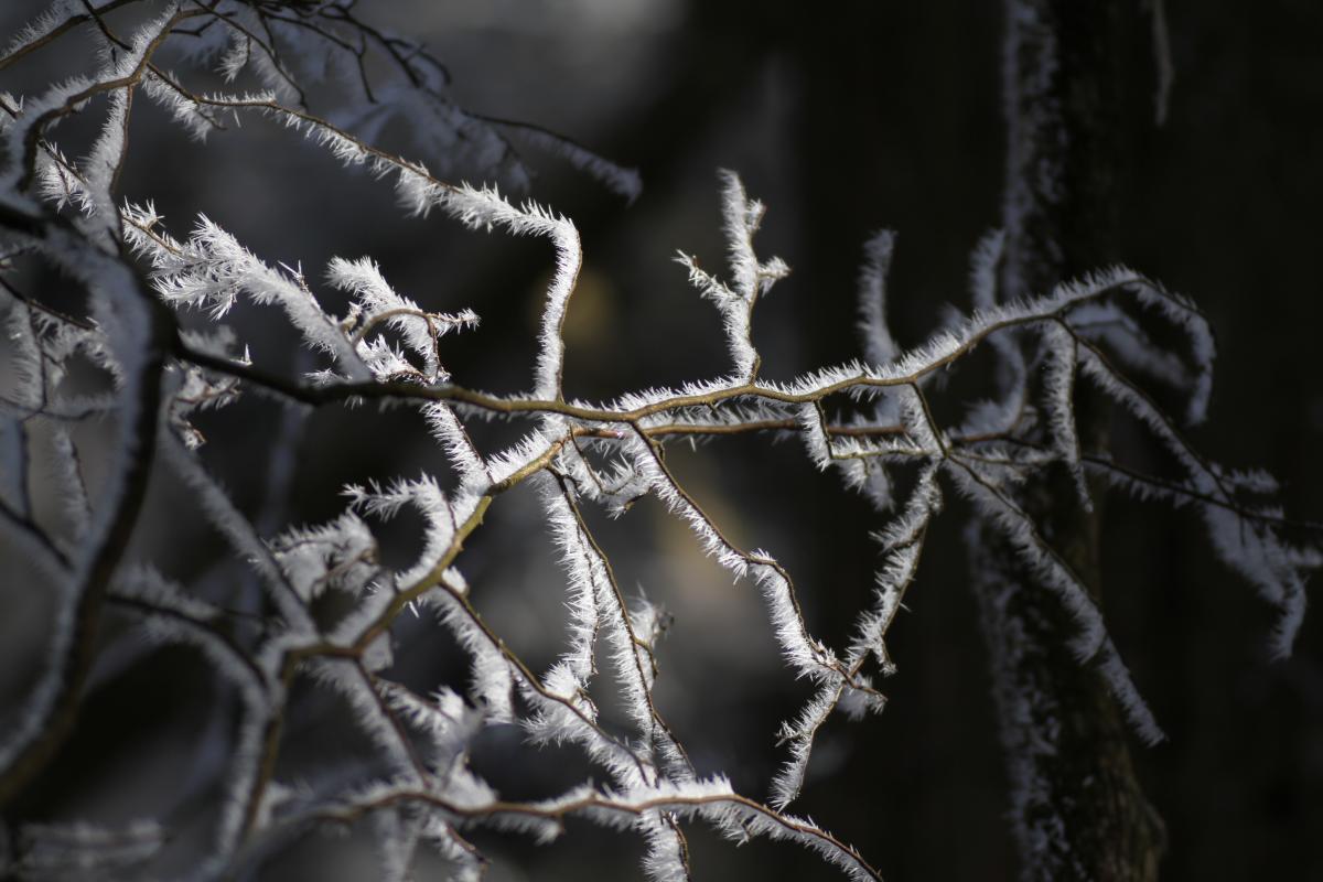 樹氷(近くから)