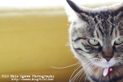 まろin猫部屋ソファー_001