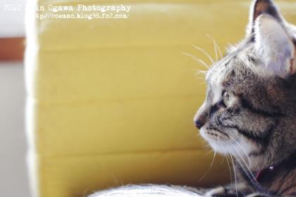 まろin猫部屋ソファー_002