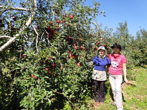 唐澤リンゴ園