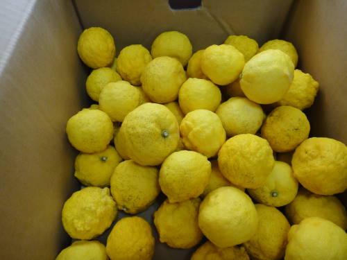 伊豆産 柚子