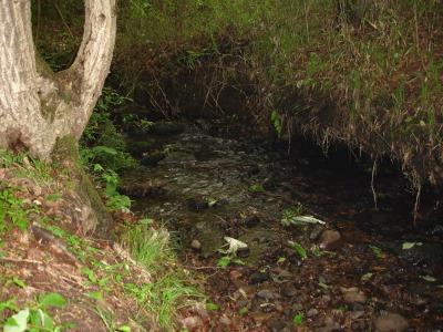 ホタルの川