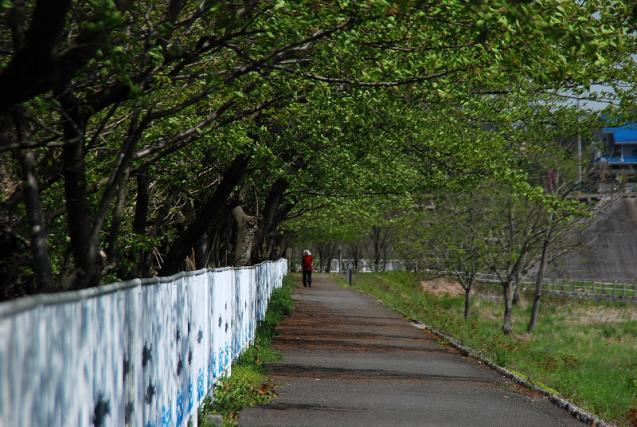 サイクリング道
