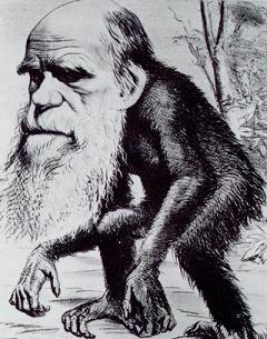 Darwin_ape[1]-1