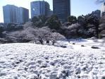 雪の後楽園1