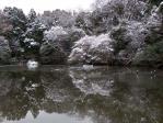 雪の明治神宮2