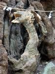 来宮神社の龍