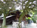 拝殿向かって左の木