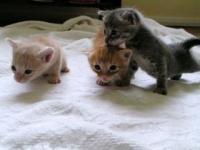 cat08013110028.jpg