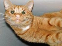 cat08013111076.jpg