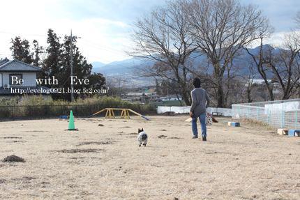 130208名犬牧場5