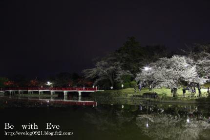 130325岩槻夜桜2