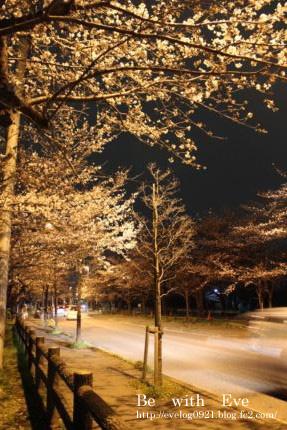130325岩槻夜桜3