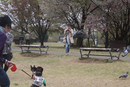 24_04_21_彩の森入間公園11